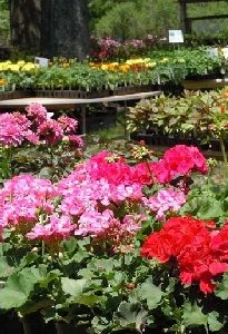 With So Many Interesting Garden Displays, Youu0027ll Want To Take Lots Of  Pictures And Start Planning Your Own Spring Garden!
