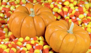 Great Pumpkin Festival September 16 - November 5 in Vernon, NJ @ Heaven Hill Farm